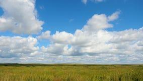 Grüne Feldsommerlandschaft, timelapse Wolken und Feld des blauen Himmels Stockbilder