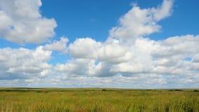 Grüne Feldsommerlandschaft, timelapse Wolken und Feld des blauen Himmels Stockfoto