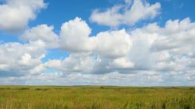 Grüne Feldsommerlandschaft, timelapse Wolken und Feld des blauen Himmels Stockfotos