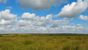 Grüne Feldsommerlandschaft, timelapse Wolken und Feld des blauen Himmels Lizenzfreies Stockbild
