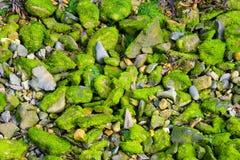 Grüne Felsen Stockfoto