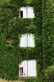 Grüne Fenster Lizenzfreies Stockbild