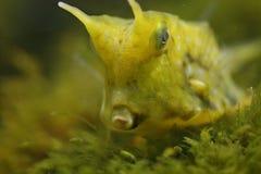 Grüne Fische Lizenzfreies Stockbild