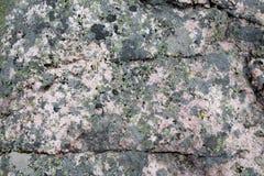 Grüne Flechte auf grauem Felsen stockbild
