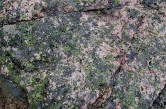 Grüne Flechte auf grauem Felsen lizenzfreie stockfotografie