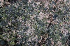 Grüne Flechte auf grauem Felsen stockfotografie