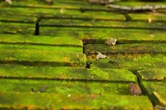 Grüne Flechte auf Ziegelsteinboden Stockbild