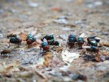 Grüne Fliege stockfoto
