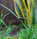 Grüne Fliege Lizenzfreies Stockbild