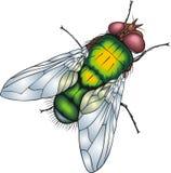 Grüne Fliege stock abbildung