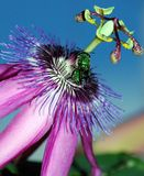 Grüne Fliegen-Neigung Lizenzfreie Stockfotografie