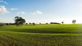 Grüne Frühlings-Felder Stockbilder