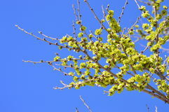Grüne Frühlingsblätter Stockfotos