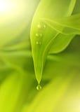 Grüne frische Blätter lizenzfreie stockfotos