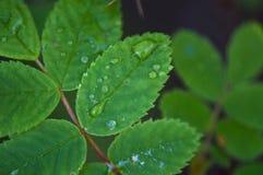 Grüne frische Blätter Lizenzfreies Stockfoto