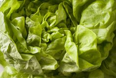 Grüne frische Salatnahaufnahme stockbild