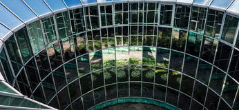 Grüne Gartenreflexionen in den Fenstern Stockfotografie