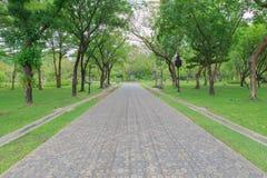 Grüne Gasse, Weg im Park lizenzfreie stockfotos