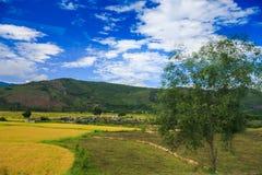 Grüne Gelb-Felder in der Landschaft gegen Hügel Lizenzfreie Stockfotos