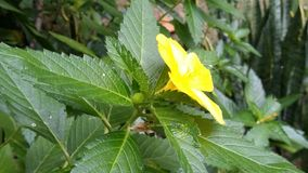 Grüne gelbe Blumen Lizenzfreies Stockbild