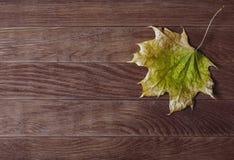 Grüne gelbe Farbe des Ahornblattes auf dem alten hölzernen Hintergrund Lizenzfreie Stockfotos