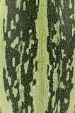 Grüne, gelbe Lebensmittelhintergrundbeschaffenheit auf Zucchini, Zucchini stockbild