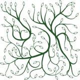 Grüne gelockte Reben mit Blättern Stockfoto