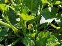 Grüne Gemüseblätter Lizenzfreie Stockfotos