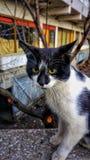 Gr?ne gemusterte Katze beobachtend beim Sitzen nahe Stra?e lizenzfreie stockbilder