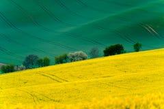 Grüne gewellte Hügel in Süd-Moray Lizenzfreie Stockbilder