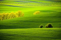 Grüne gewellte Hügel in Süd-Moray Stockbilder