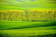 Grüne gewellte Hügel in Süd-Moray Lizenzfreie Stockfotos