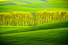 Grüne gewellte Hügel in Süd-Moray Stockfotos