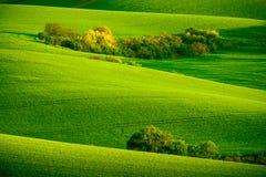 Grüne gewellte Hügel in Süd-Moray Stockfotografie