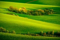 Grüne gewellte Hügel in Süd-Moray Lizenzfreie Stockfotografie