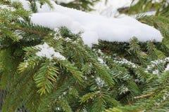 Grüne gezierte Tatzen unter der Schneenahaufnahme lizenzfreies stockbild