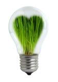 Grüne Glühlampe Stockbild