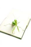 Grüne Gottesanbeterin auf einem alten Buch, Abschluss oben, selektiver Fokus Lächeln! M Lizenzfreies Stockbild