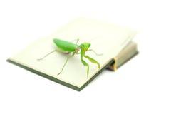 Grüne Gottesanbeterin auf einem alten Buch, Abschluss oben, selektiver Fokus Mantodea Stockfotografie
