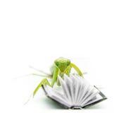 Grüne Gottesanbeterin auf einem alten Buch, Abschluss oben, selektiver Fokus Mantodea Lizenzfreie Stockfotografie