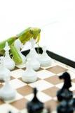 Grüne Gottesanbeterin, die oben Schach auf dem Schachbrett, Abschluss, selecti spielt Lizenzfreie Stockfotografie