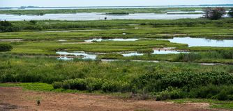 Grüne Gräser und blaues Wasser Lizenzfreie Stockbilder
