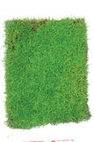 Grüne Gras-Arena lokalisiert auf weißem Hintergrund Stockbild