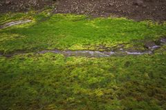 Grüne gras Stelle an viti Krater an krafla geothermischem Bereich Island stockfoto