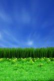 Grüne gress und blauer Himmel Stockfotos