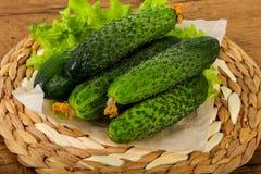Grüne Gurken Lizenzfreie Stockfotografie