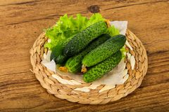 Grüne Gurken Lizenzfreie Stockfotos