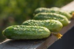 Grüne Gurkenlüge auf dem Brett Stockfotografie