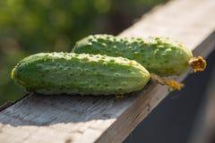 Grüne Gurkenlüge auf dem Brett Lizenzfreie Stockfotos