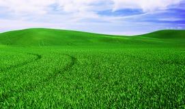 Grüne Hügel Stockfotos